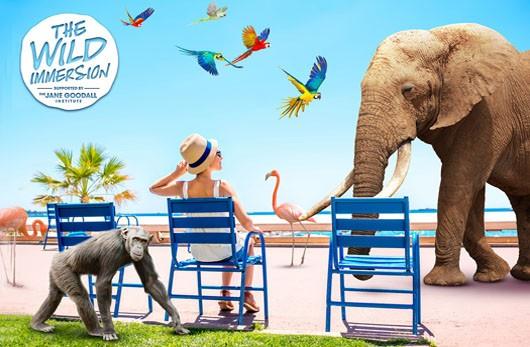 Cannes 2018 Wild immersion: Expérience unique Plage du Majestic